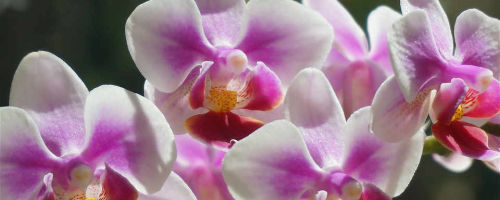 Особенности удобрения орхидеи: советы и рекомендации по выбору подкормки