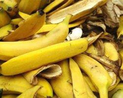 Универсальное удобрение из банановой кожуры: рецепты приготовления и особенности подкормки